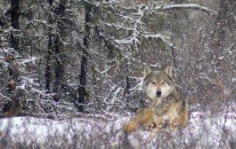 صورة اليوم من مقاطعة Yukon - كندا