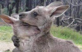 صورة تلخص ما يحدث في أستراليا ..!