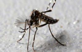 هل ينقل البعوض والذباب فيروس كورونا من شخص إلى آخر..؟