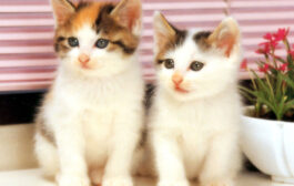 اردنية ترفع دعوى قضائية لتضرر قطتيها نفسيا..!