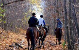 رحلتي لإسطبل الأحصنة وتجربتي بركوب الخيل