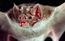 فايروس قاتل تنقله الخفافيش يثير خوف العلماء من تفشي وباء جديد
