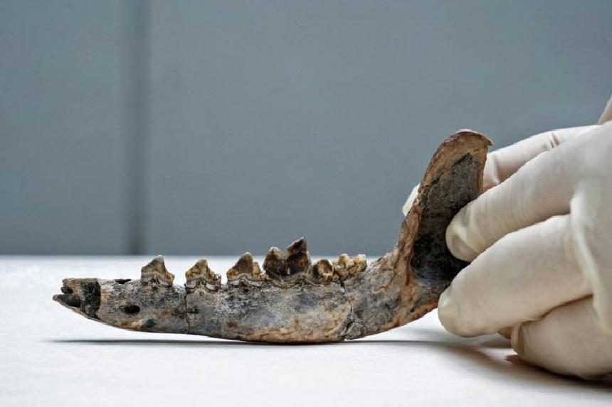 فك كلب قد يؤشر إلى وجود بشري قبل 12 ألف عام
